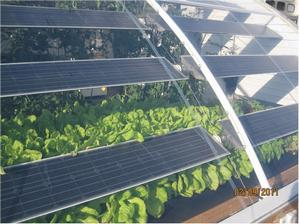 GreenhouseGreens1Small