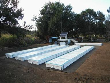 Jerry : Here Aquaponic fish tank liner