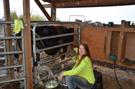 Maika'i Loa First Milking